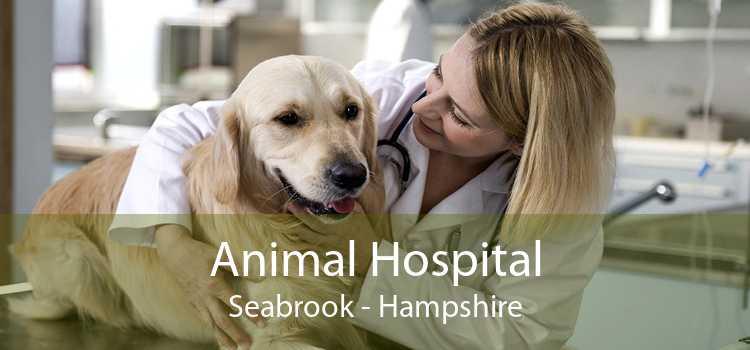 Animal Hospital Seabrook - Hampshire