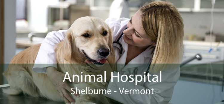 Animal Hospital Shelburne - Vermont