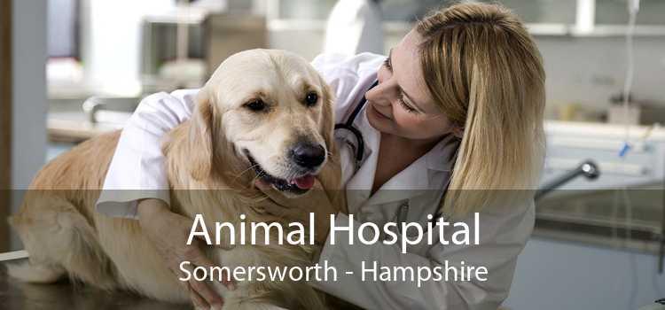 Animal Hospital Somersworth - Hampshire