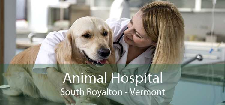 Animal Hospital South Royalton - Vermont
