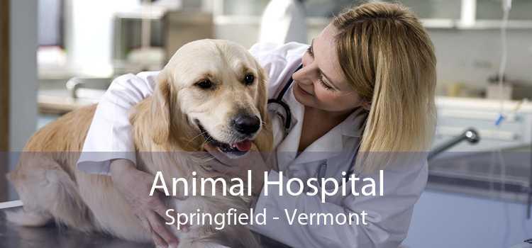 Animal Hospital Springfield - Vermont