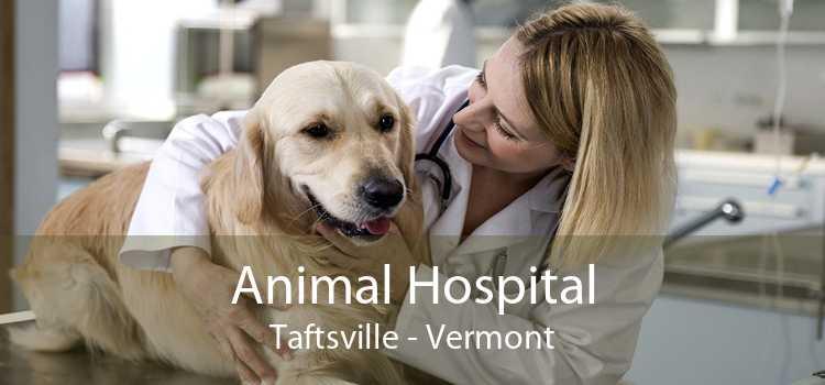 Animal Hospital Taftsville - Vermont