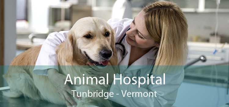 Animal Hospital Tunbridge - Vermont