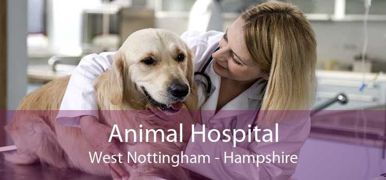 Animal Hospital West Nottingham - Hampshire