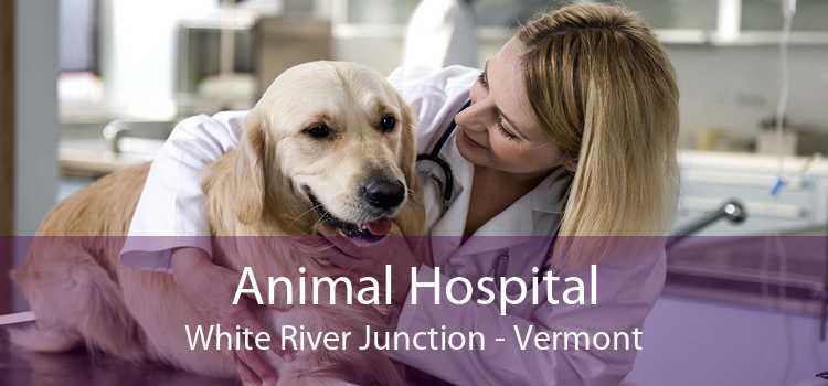 Animal Hospital White River Junction - Vermont