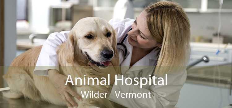 Animal Hospital Wilder - Vermont