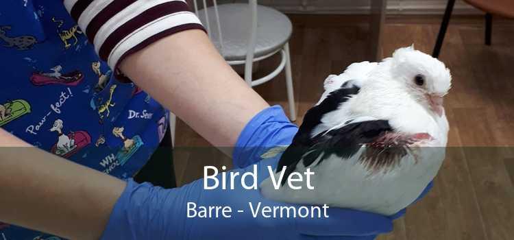 Bird Vet Barre - Vermont