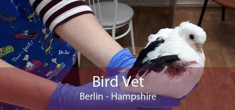Bird Vet Berlin - Hampshire