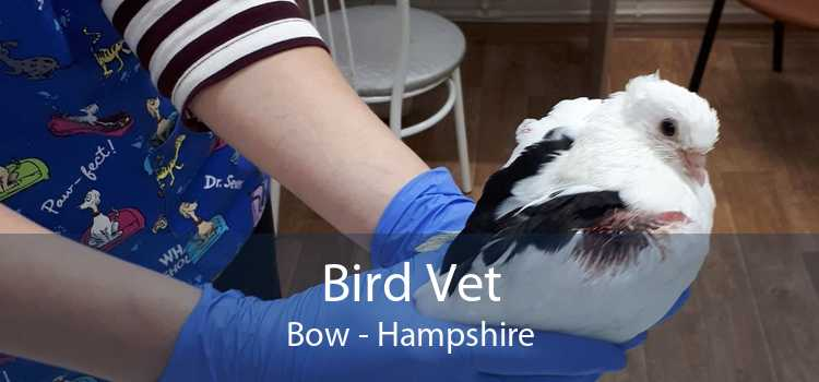 Bird Vet Bow - Hampshire