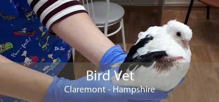 Bird Vet Claremont - Hampshire