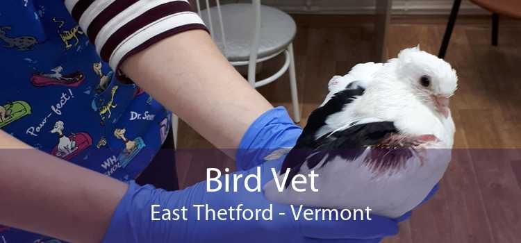 Bird Vet East Thetford - Vermont