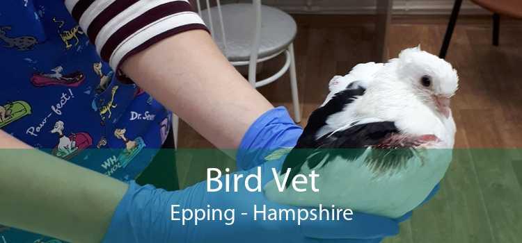 Bird Vet Epping - Hampshire