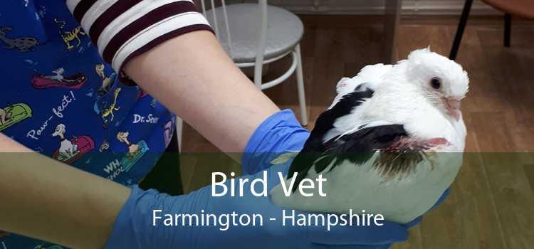Bird Vet Farmington - Hampshire