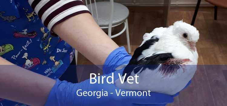 Bird Vet Georgia - Vermont