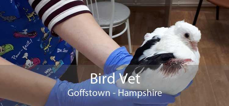 Bird Vet Goffstown - Hampshire