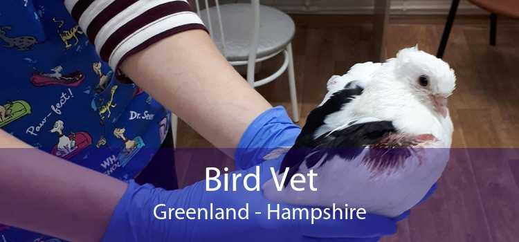 Bird Vet Greenland - Hampshire