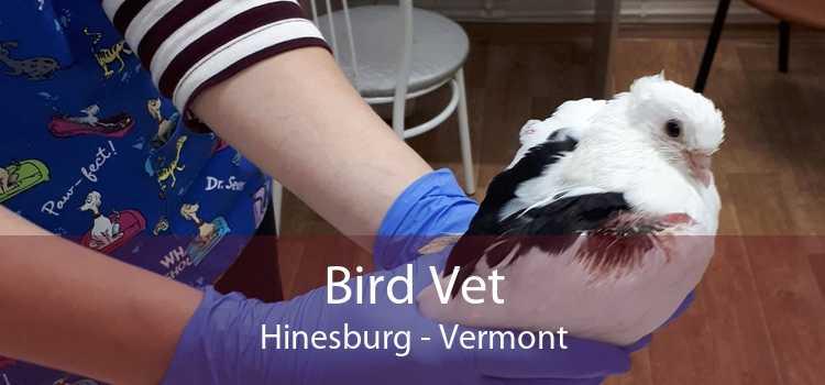 Bird Vet Hinesburg - Vermont