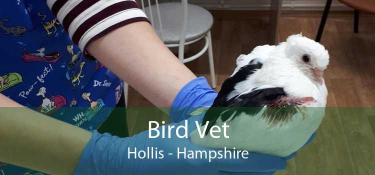Bird Vet Hollis - Hampshire