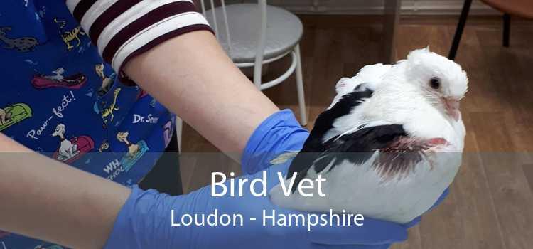 Bird Vet Loudon - Hampshire