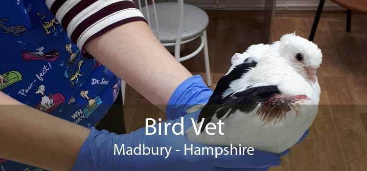 Bird Vet Madbury - Hampshire