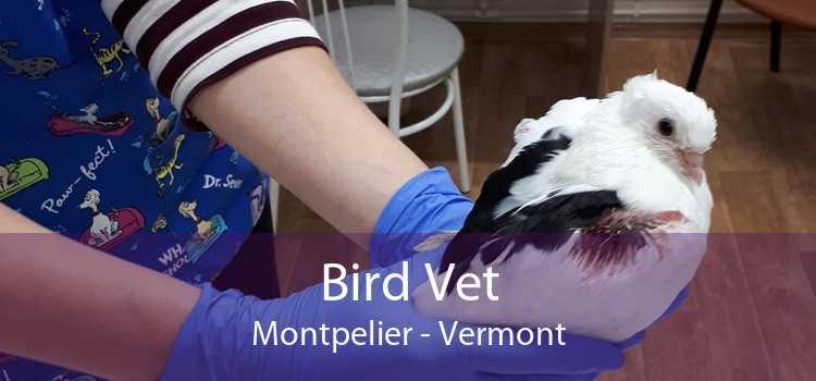 Bird Vet Montpelier - Vermont