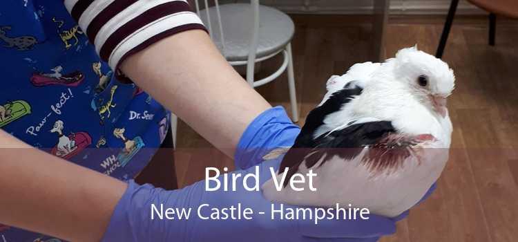 Bird Vet New Castle - Hampshire