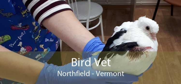 Bird Vet Northfield - Vermont