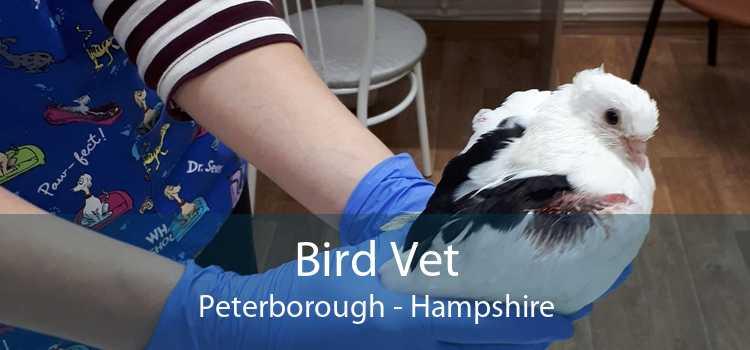 Bird Vet Peterborough - Hampshire