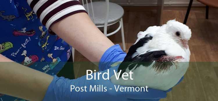 Bird Vet Post Mills - Vermont