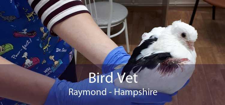 Bird Vet Raymond - Hampshire
