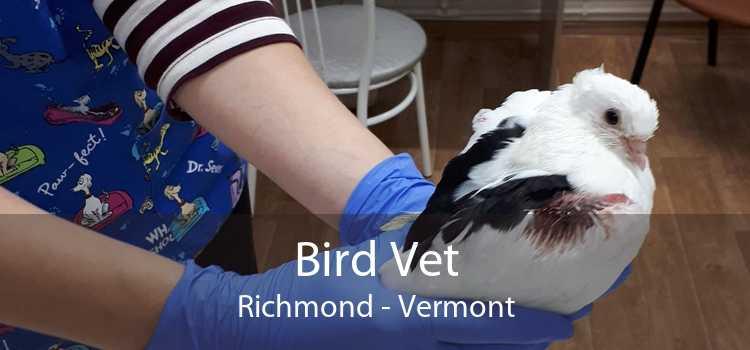 Bird Vet Richmond - Vermont