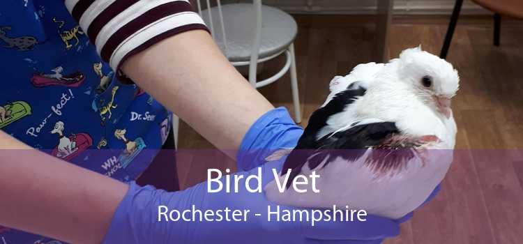 Bird Vet Rochester - Hampshire