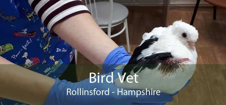 Bird Vet Rollinsford - Hampshire