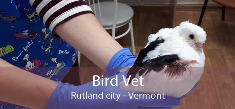 Bird Vet Rutland city - Vermont