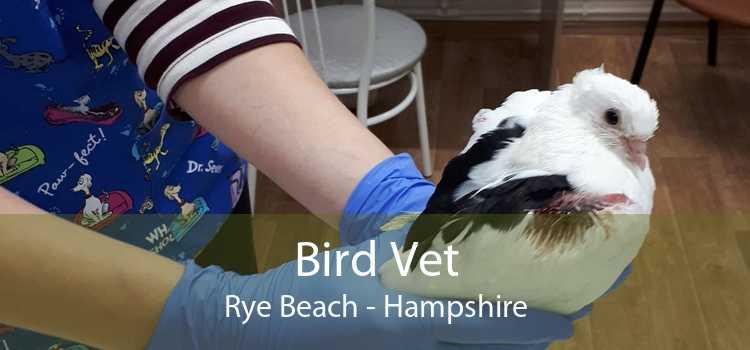 Bird Vet Rye Beach - Hampshire