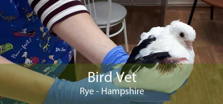 Bird Vet Rye - Hampshire