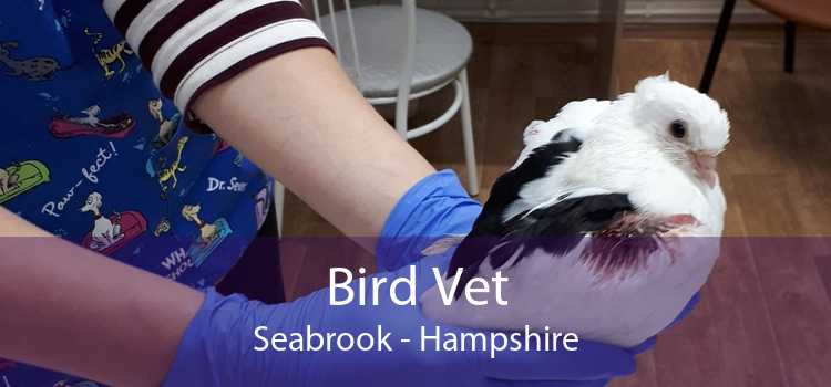 Bird Vet Seabrook - Hampshire