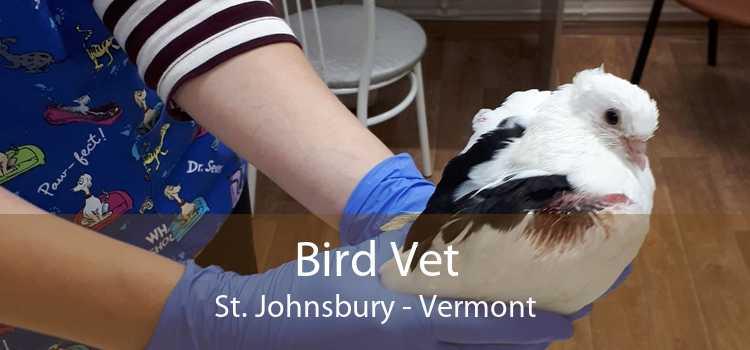 Bird Vet St. Johnsbury - Vermont