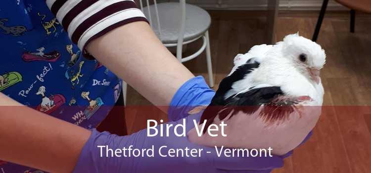 Bird Vet Thetford Center - Vermont
