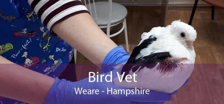 Bird Vet Weare - Hampshire