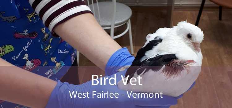 Bird Vet West Fairlee - Vermont
