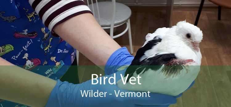 Bird Vet Wilder - Vermont