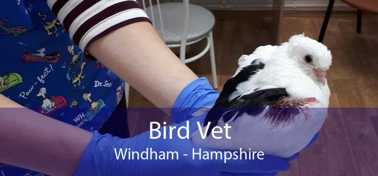Bird Vet Windham - Hampshire