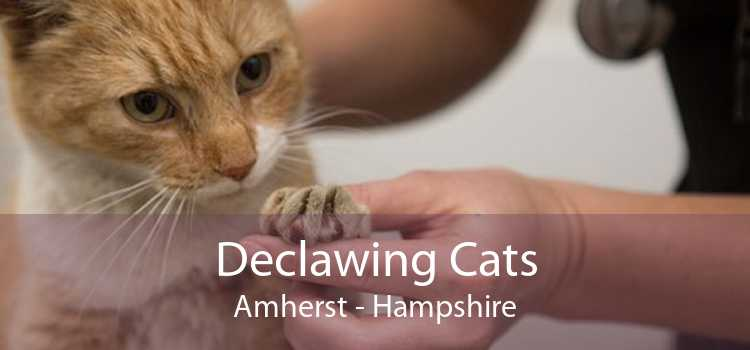 Declawing Cats Amherst - Hampshire