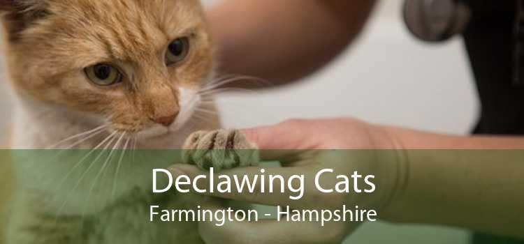 Declawing Cats Farmington - Hampshire