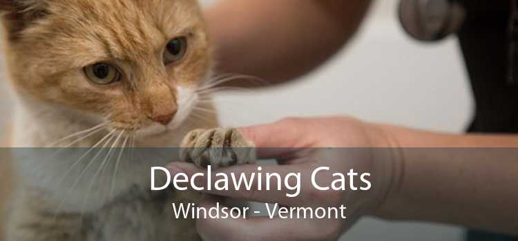 Declawing Cats Windsor - Vermont