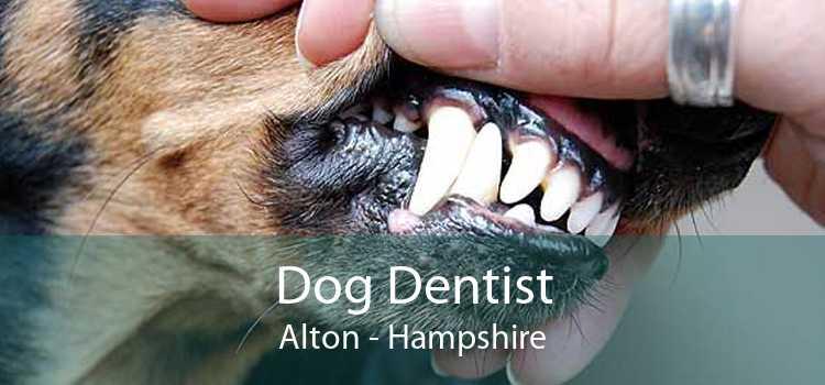 Dog Dentist Alton - Hampshire