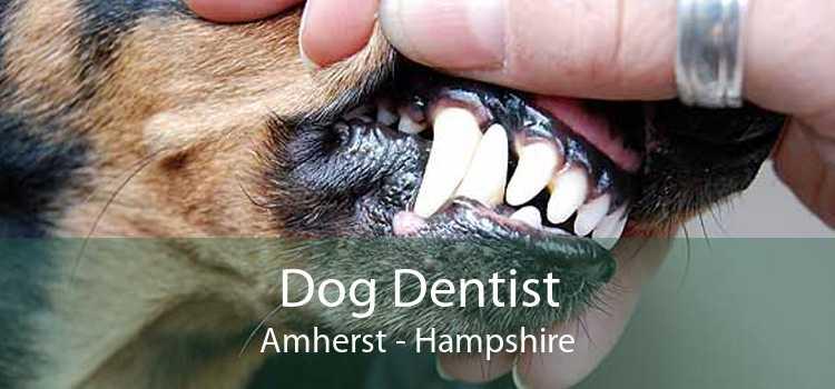 Dog Dentist Amherst - Hampshire