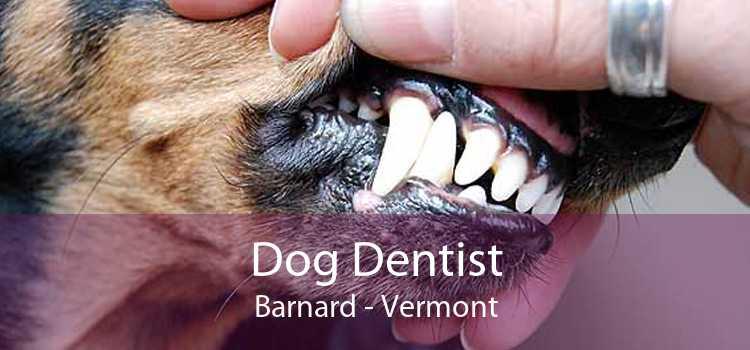 Dog Dentist Barnard - Vermont