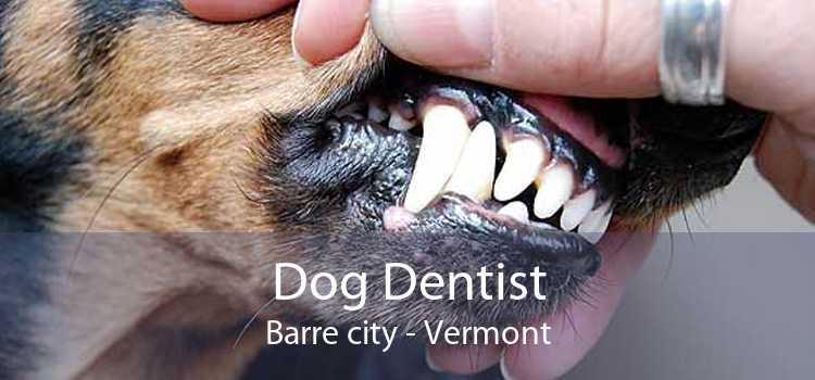 Dog Dentist Barre city - Vermont